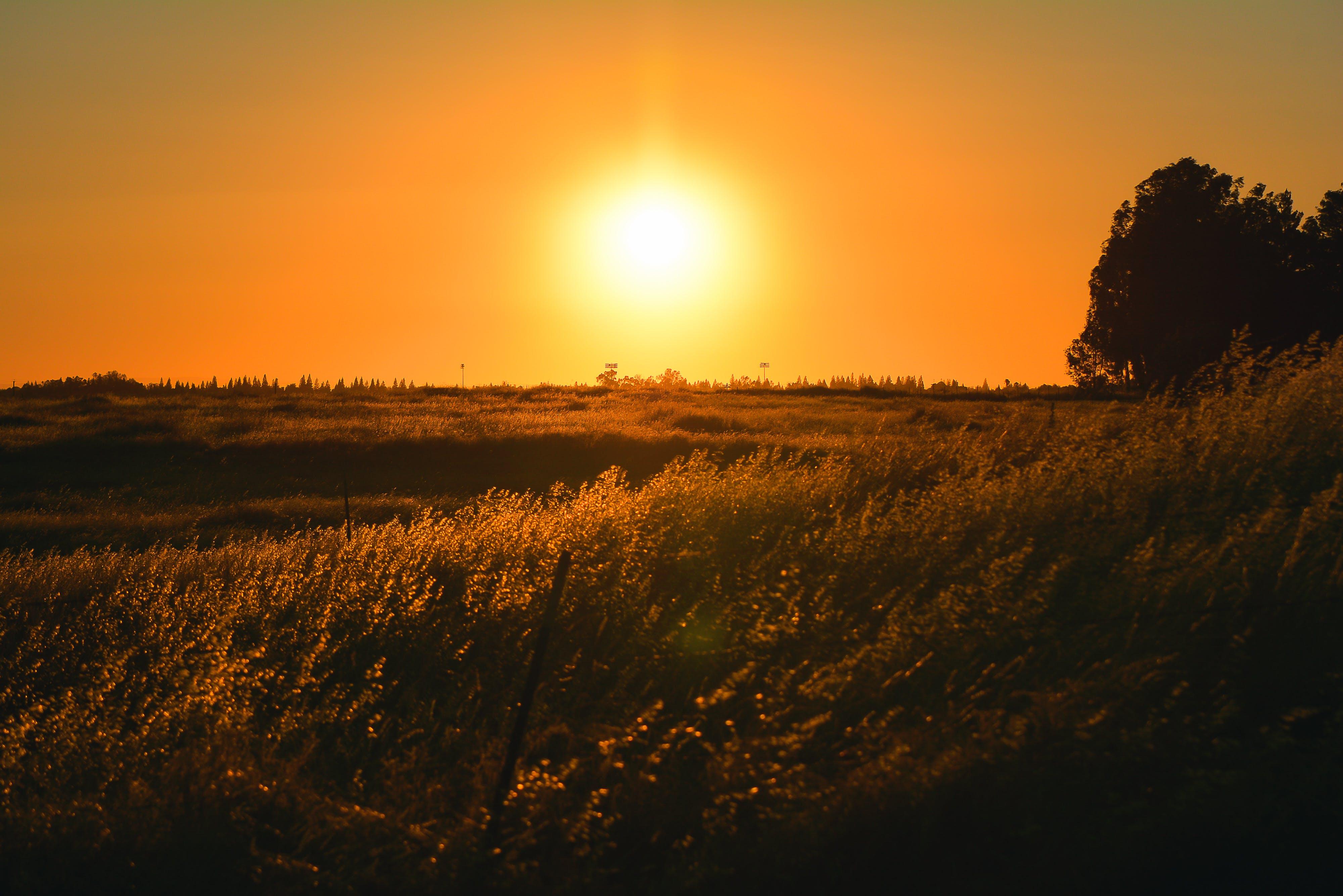 Kostenloses Stock Foto zu dämmerung, draußen, feld, goldenen sonnenuntergang