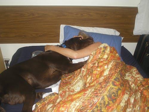 Free stock photo of Girl hugs dog chocolate-lab