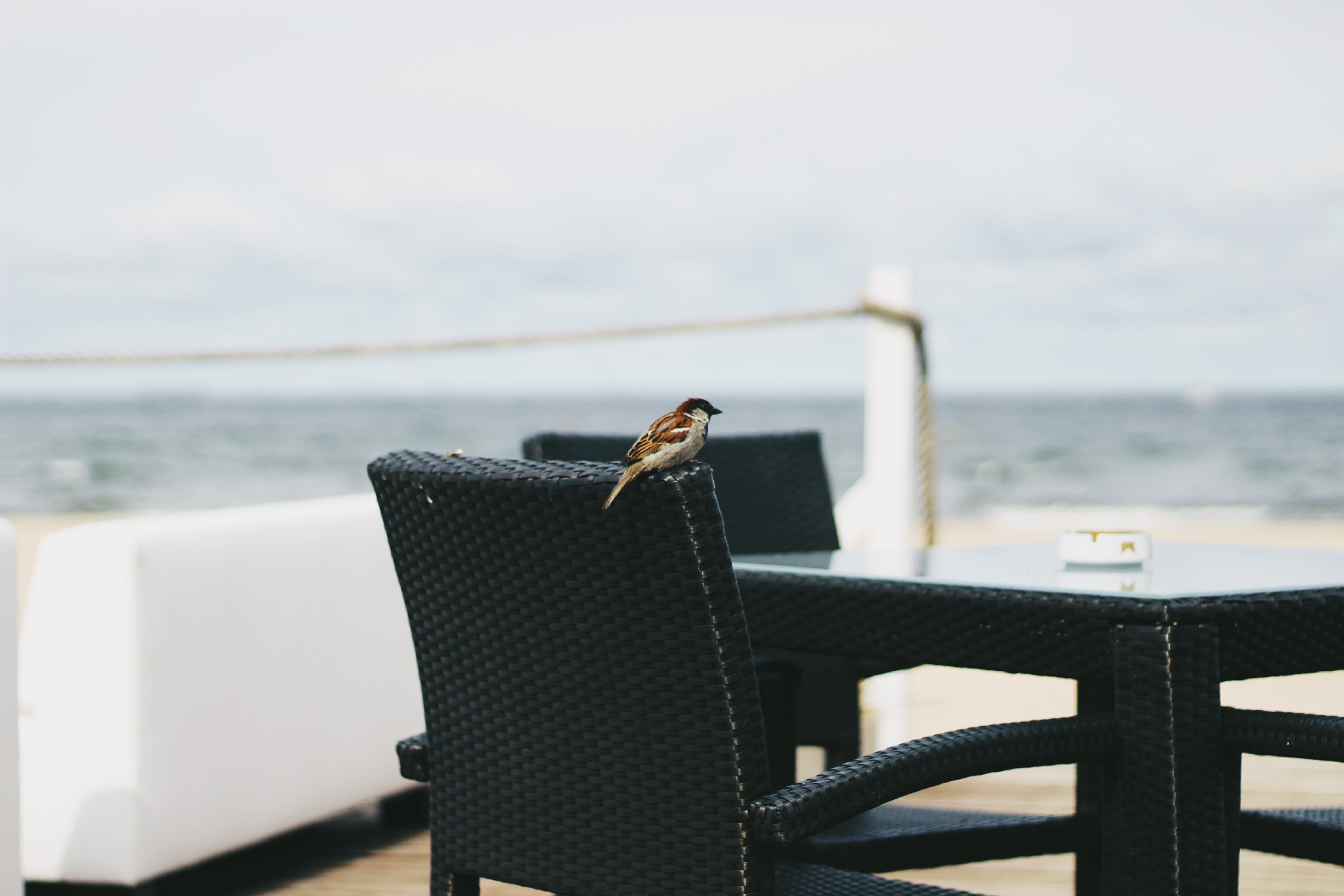 Brown Bird perched on Black Woven