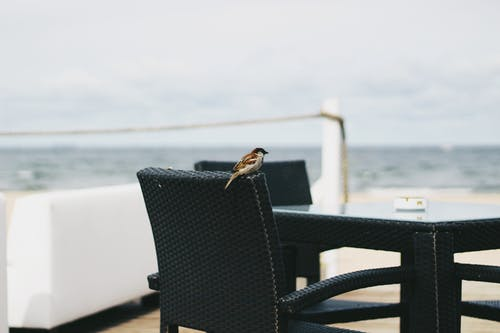 Photos gratuites de aviaire, chaise, chaises, dehors