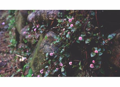 Základová fotografie zdarma na téma #wildlife, kámen, mokrá tráva, mokrý