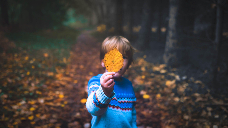 Boy Wearing Blue Sweater Holding Brown Leaf