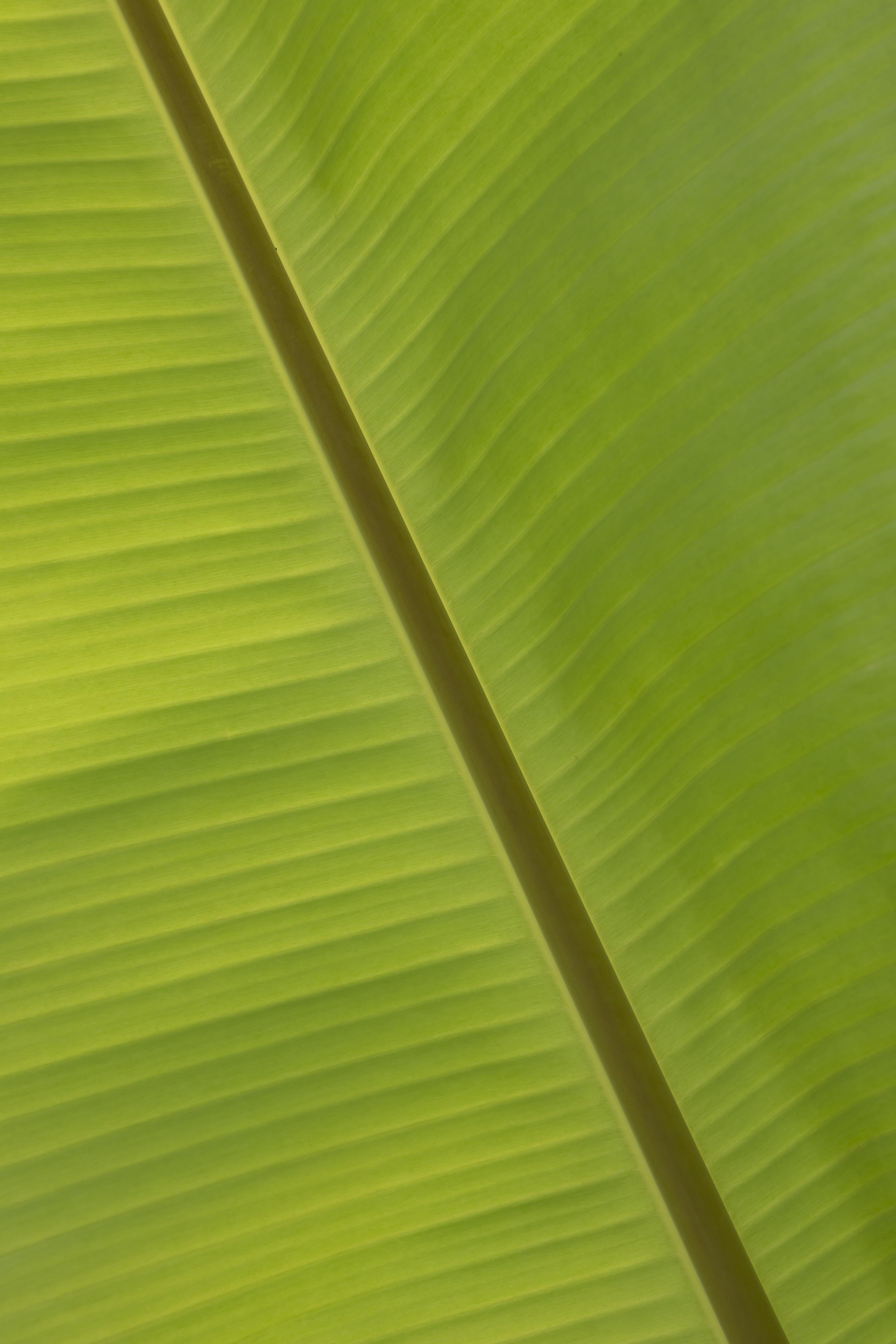 Free stock photo of abstract, banana, banana leaf, bright
