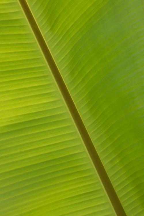 Free stock photo of banana, banana leaf, bright, close-up