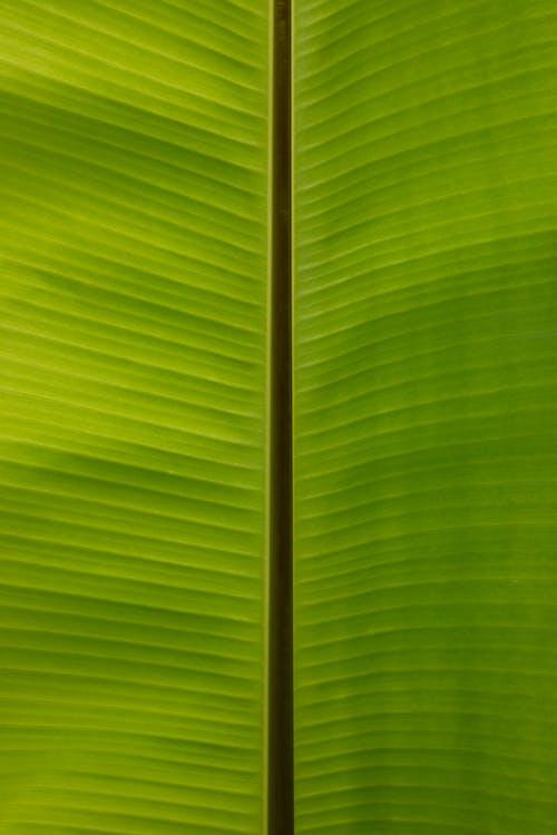คลังภาพถ่ายฟรี ของ กล้วย, ชีวิต, ต้นไม้, ธรรมชาติ