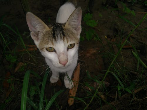 Free stock photo of animal, cat, cute cat