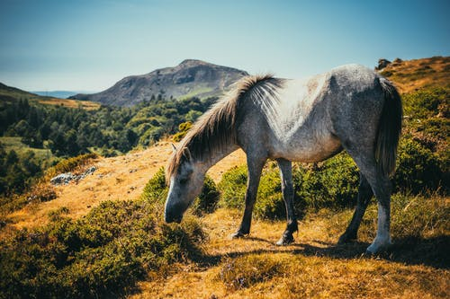 Photo of White and Gray Horse Grazing