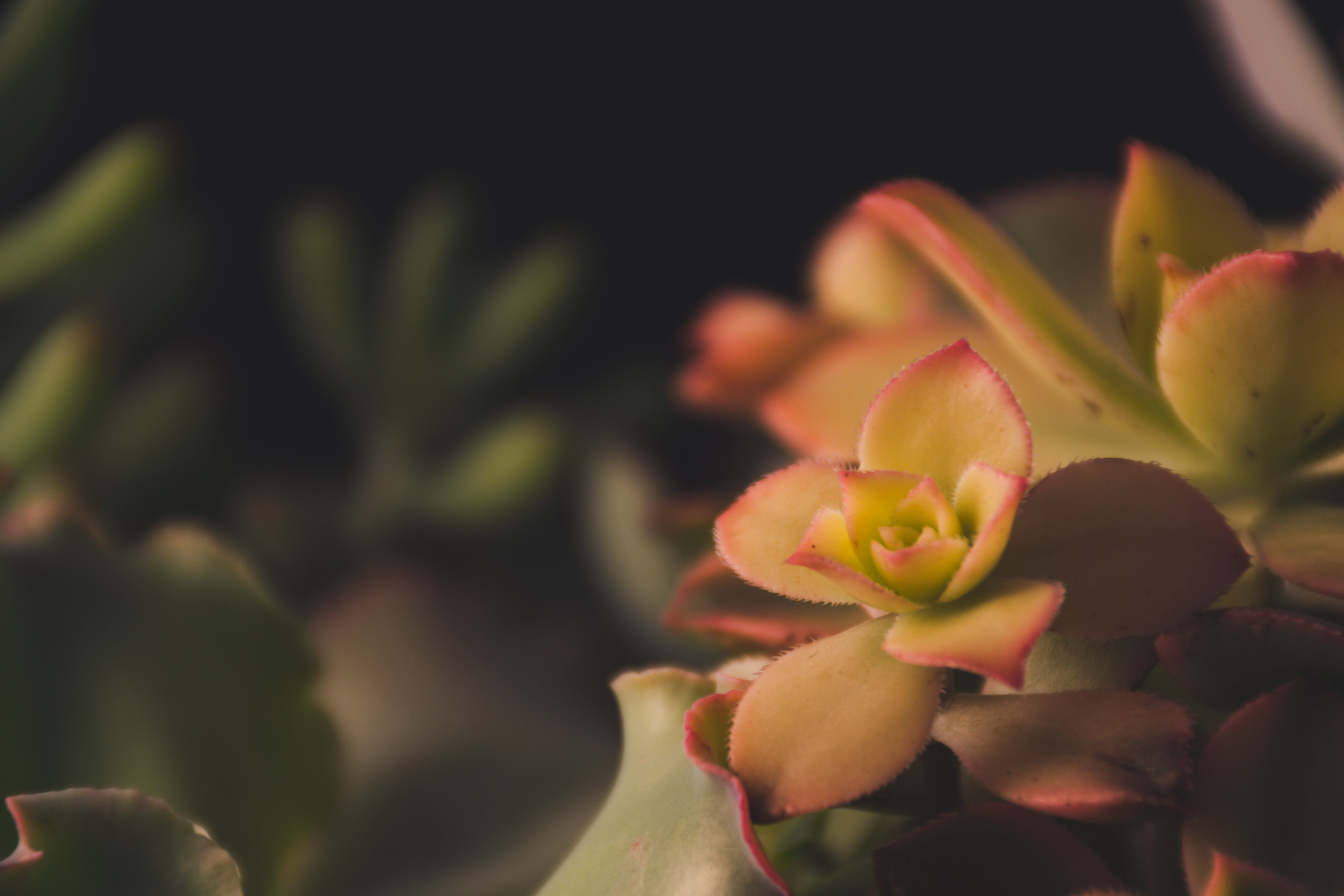 Focus Photography of Green Petaled Flowers