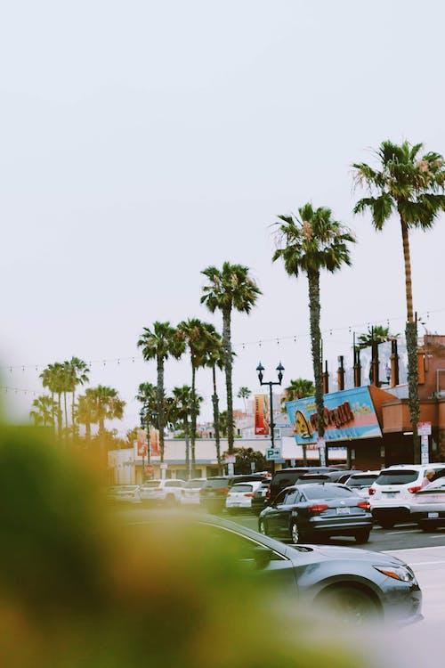 Δωρεάν στοκ φωτογραφιών με αυτοκίνητα, δέντρα, δρόμος, καλοκαίρι