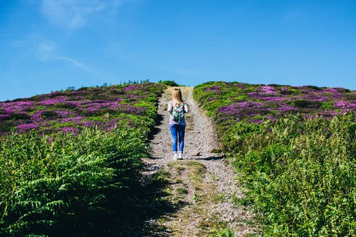 Foto profissional grátis de alfazema, andando, área, aventura