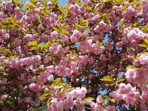 çiçek, Çiçekler, doğa, Güneş içeren Ücretsiz stok fotoğraf