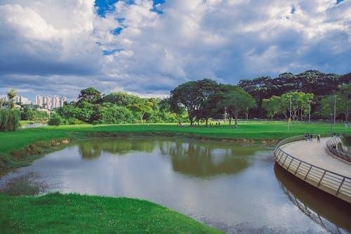 Gratis lagerfoto af barigui, brasilien, Curitiba, grøn