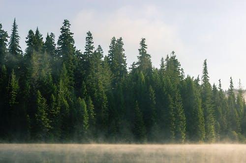 Gratis stockfoto met bomen, Bos, mist