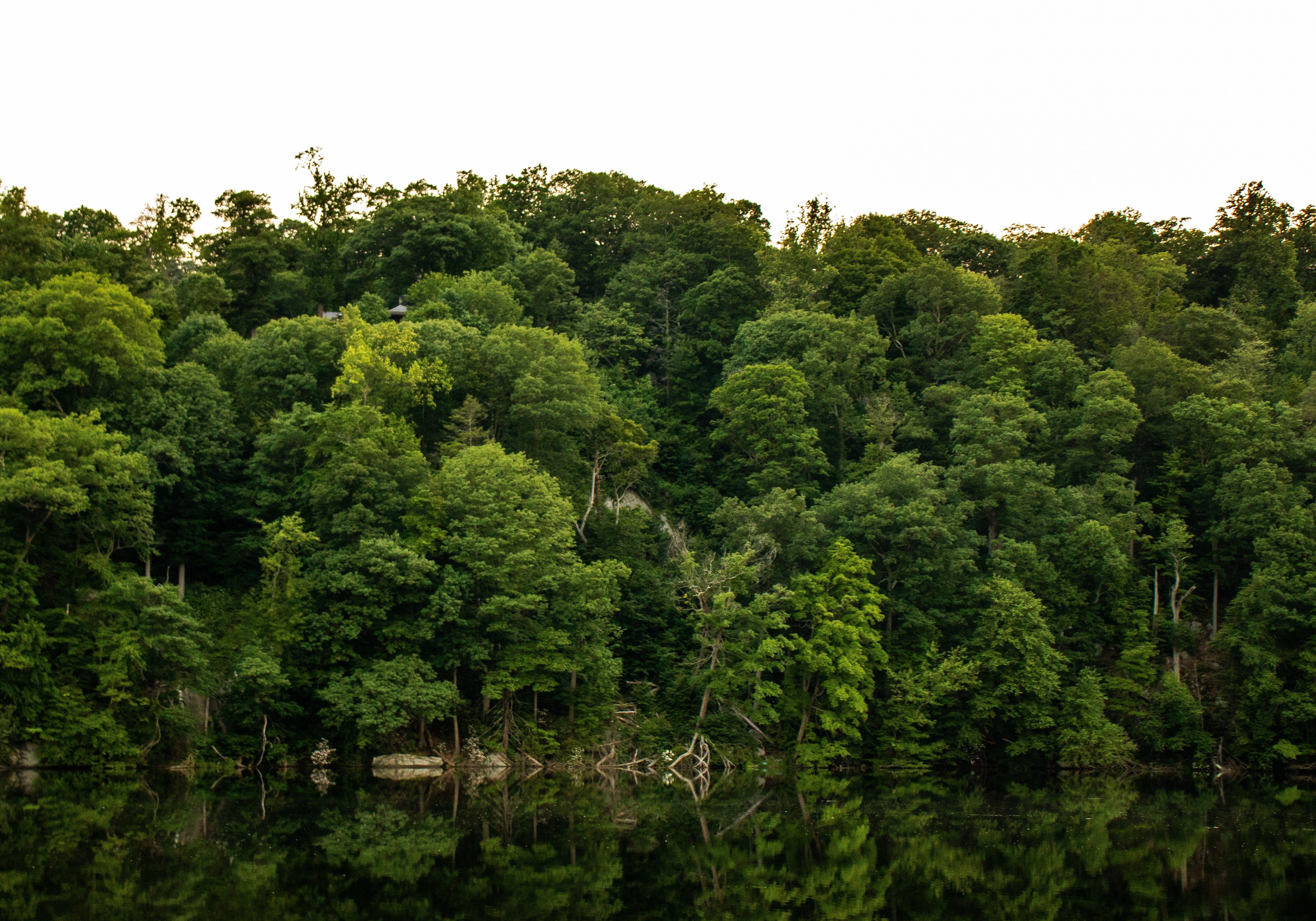 Foto profissional grátis de águas calmas, árvores, luz do dia, parque natural