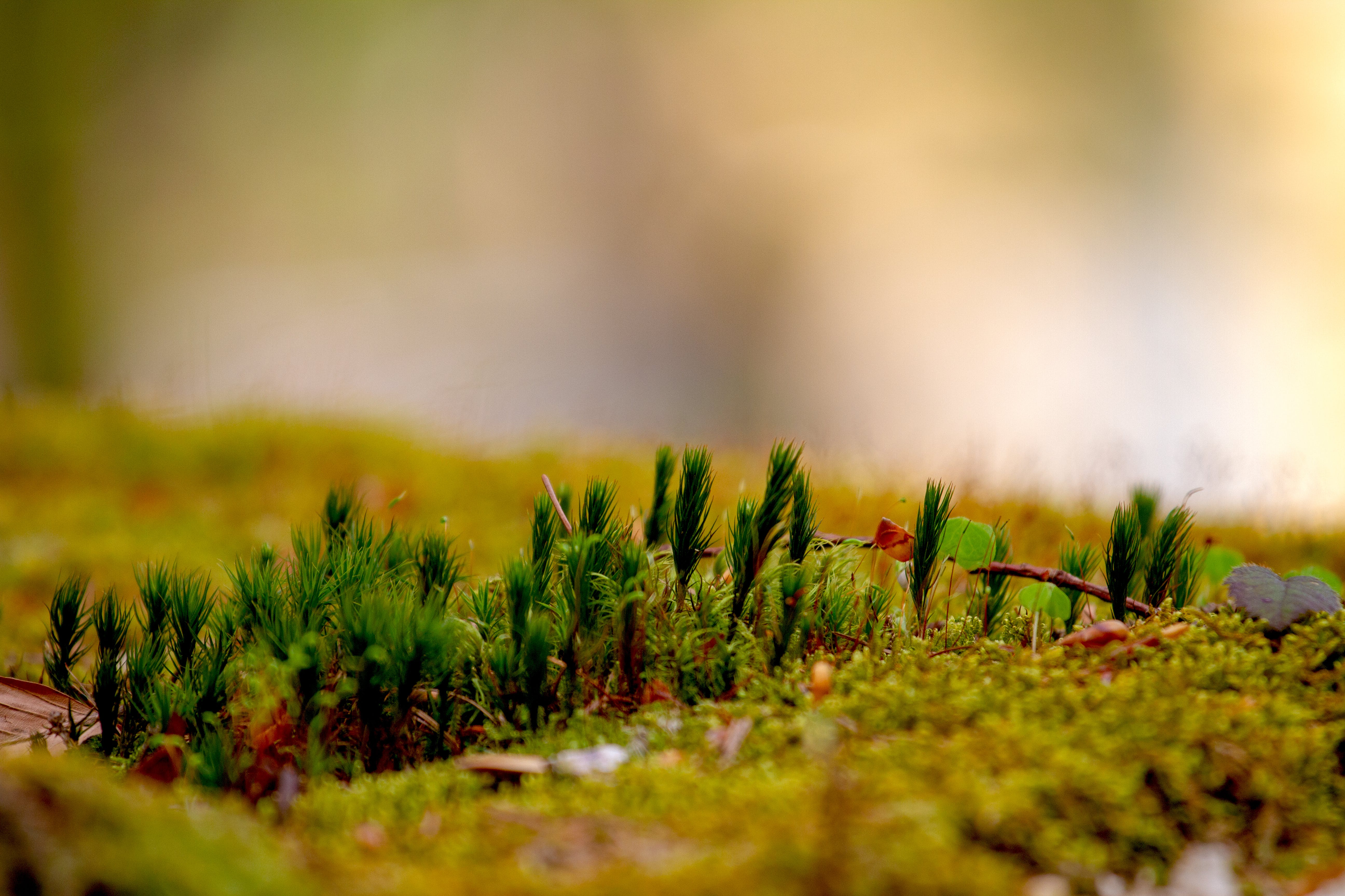 Selective Focus Photo of Green Grasses