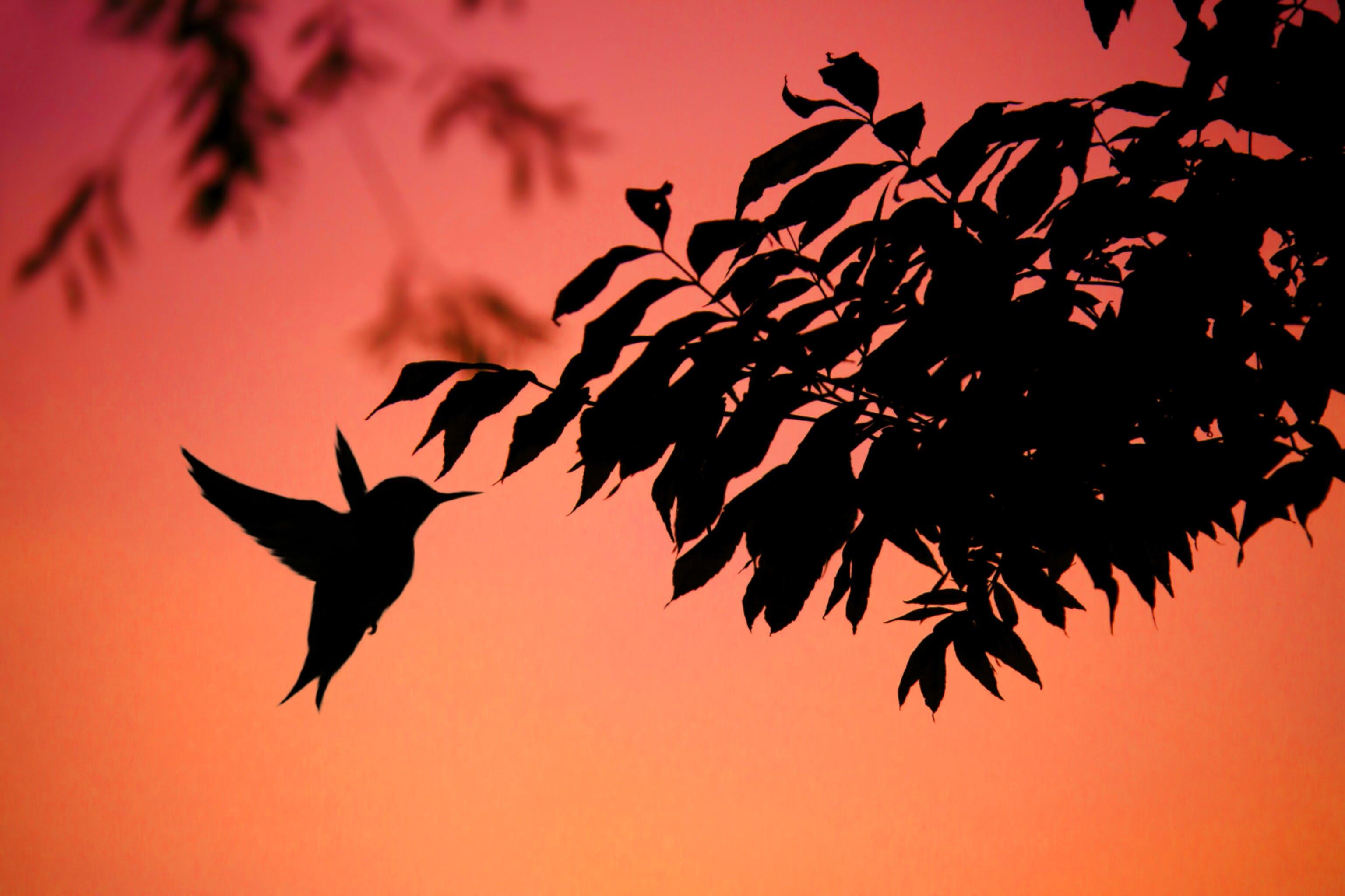 Silhouette Photo of Bird Flying Near Leaf