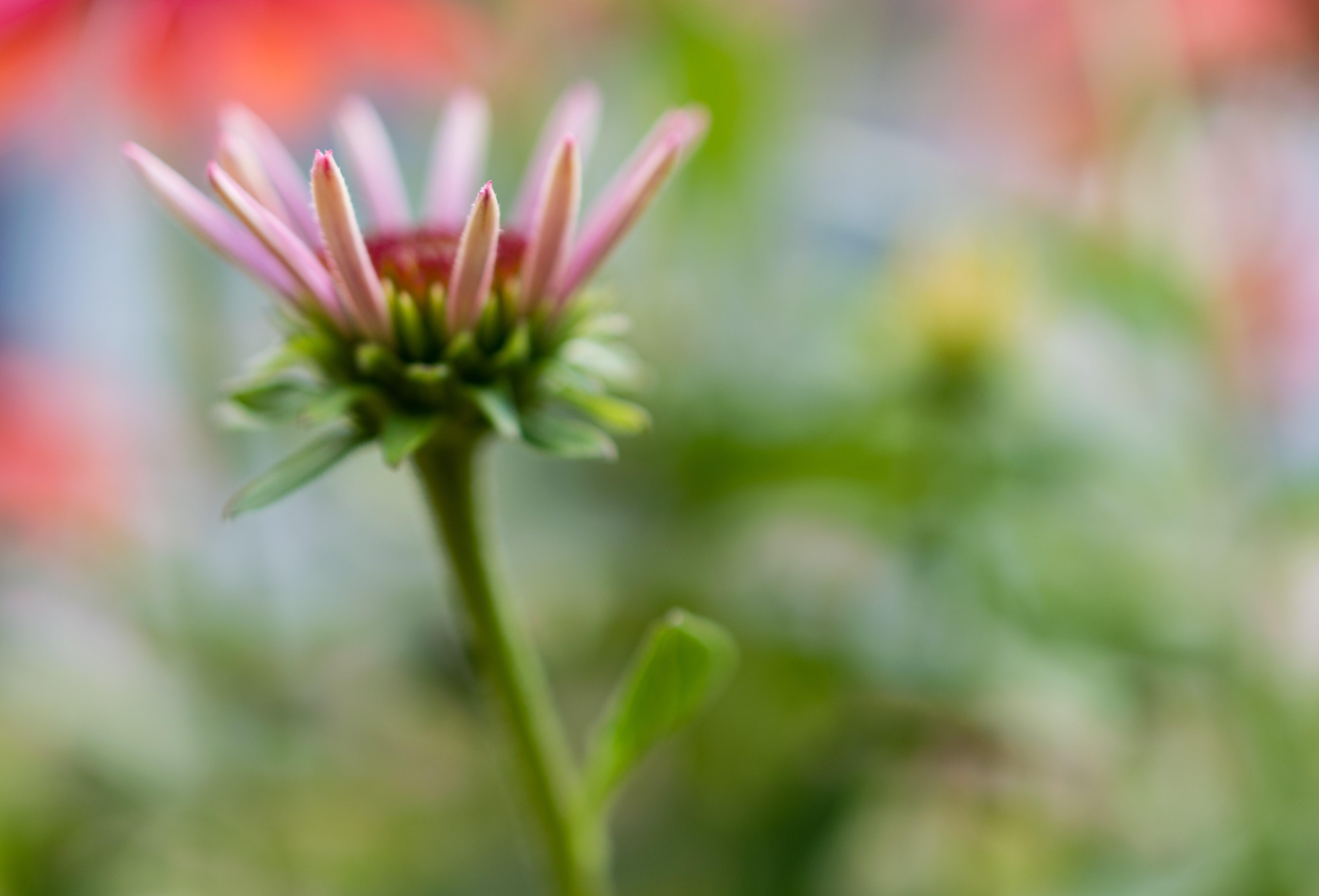 Δωρεάν στοκ φωτογραφιών με κήπος, λουλούδια, φυτά