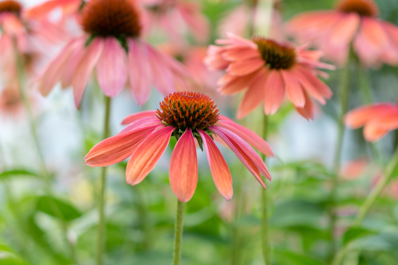 Gratis lagerfoto af blomster, have, kraftværker