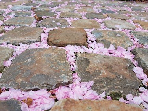 arnavut kaldırımı, Çiçekler, mor, parke taşı içeren Ücretsiz stok fotoğraf