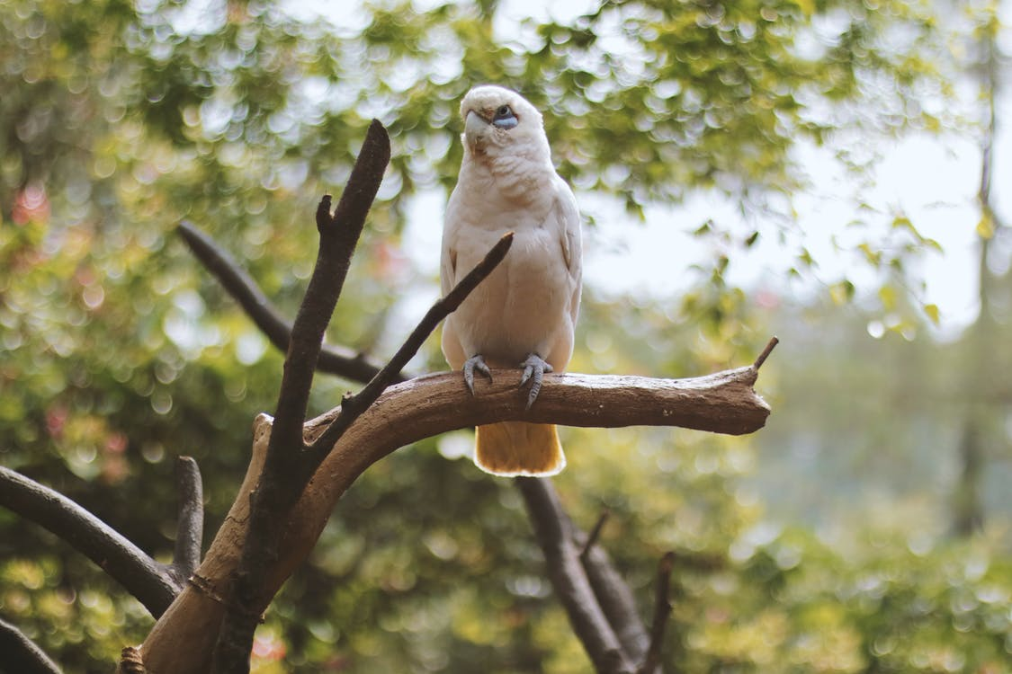 White Bird Stand on Branch of Tree