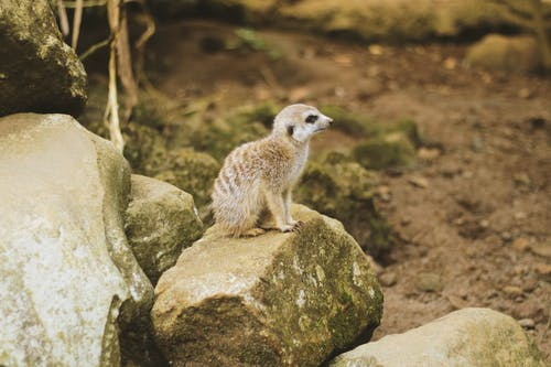 etobur, hayvan, hayvan fotoğrafçılığı, kayalar içeren Ücretsiz stok fotoğraf