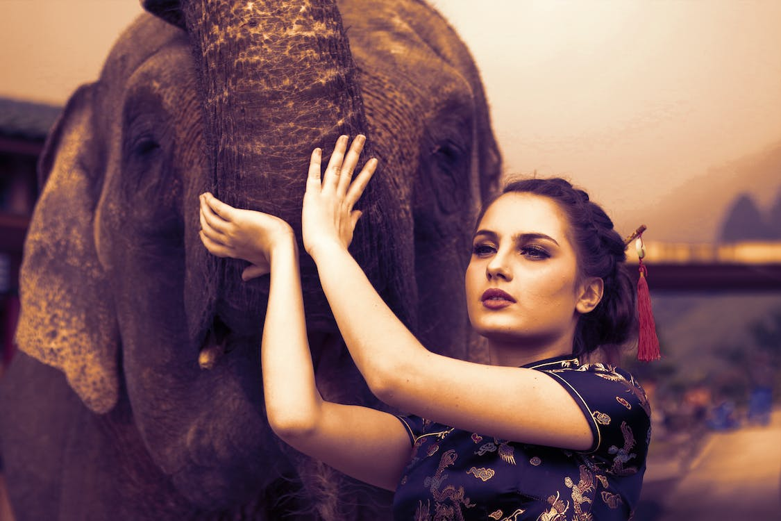 elefant, fotosession, frisure