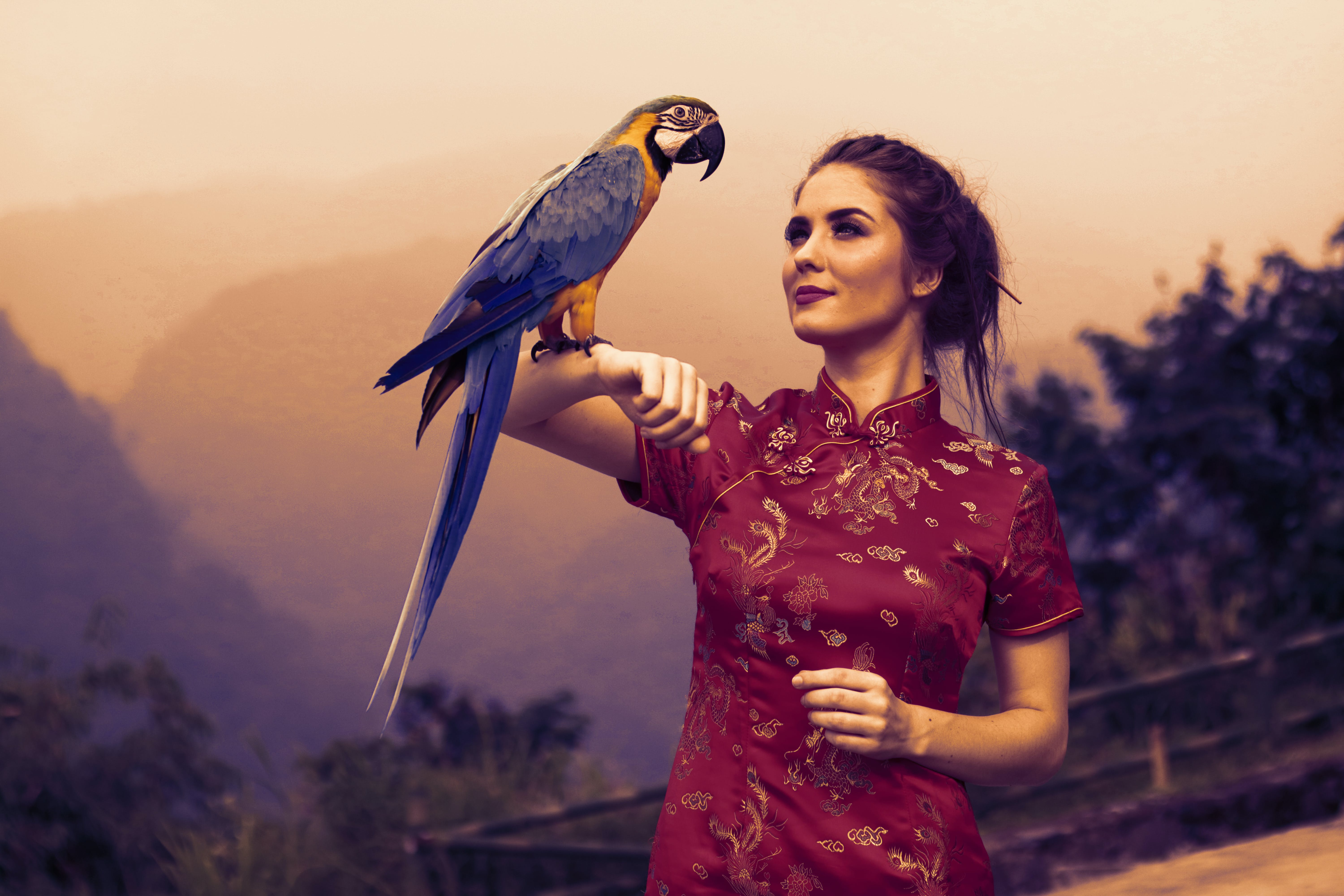 Free stock photo of woman with animal