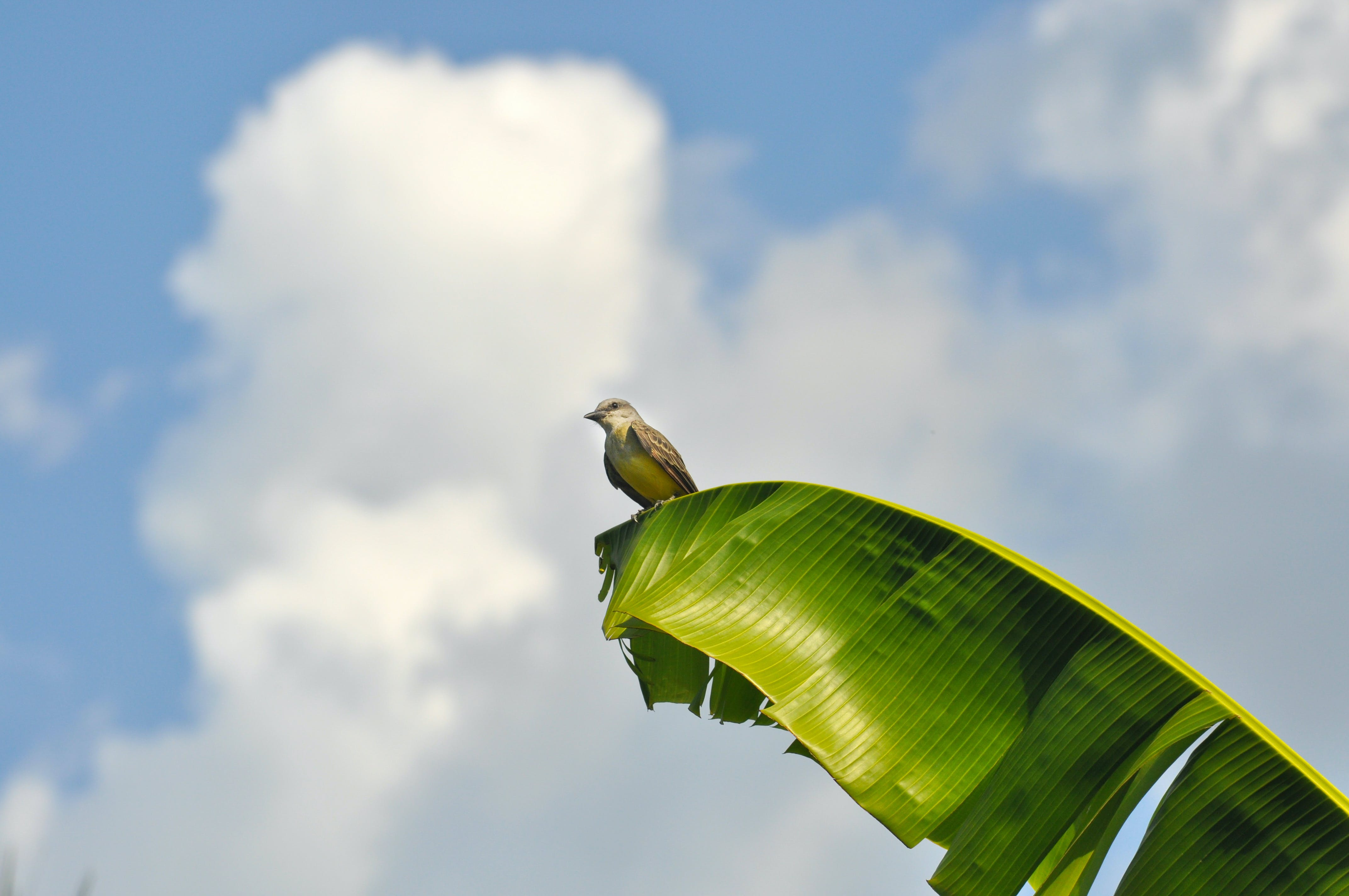 Photo of Brown Bird Perching on Green Banana Leaf
