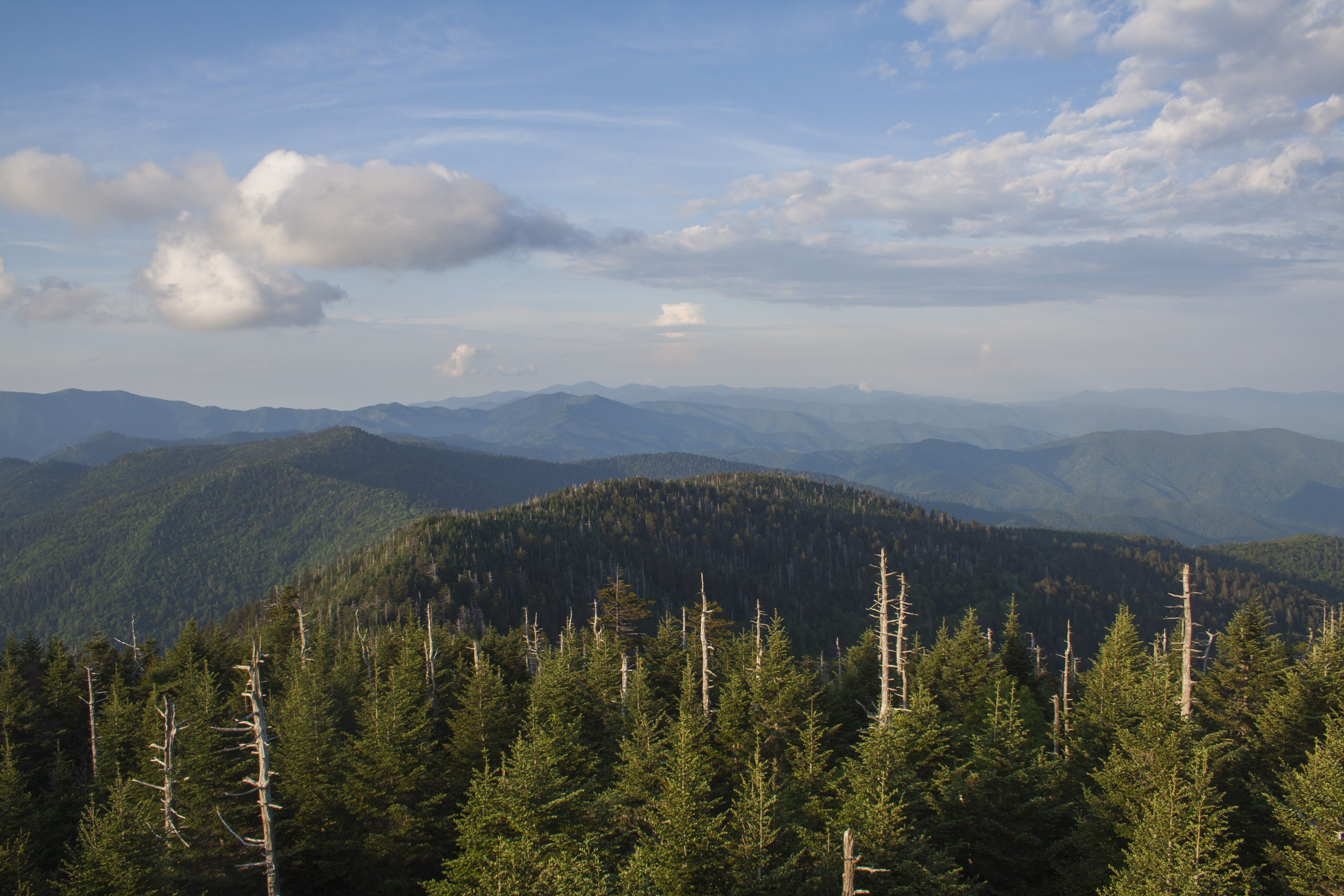 Free stock photo of blue ridge, nature, smoky mountains
