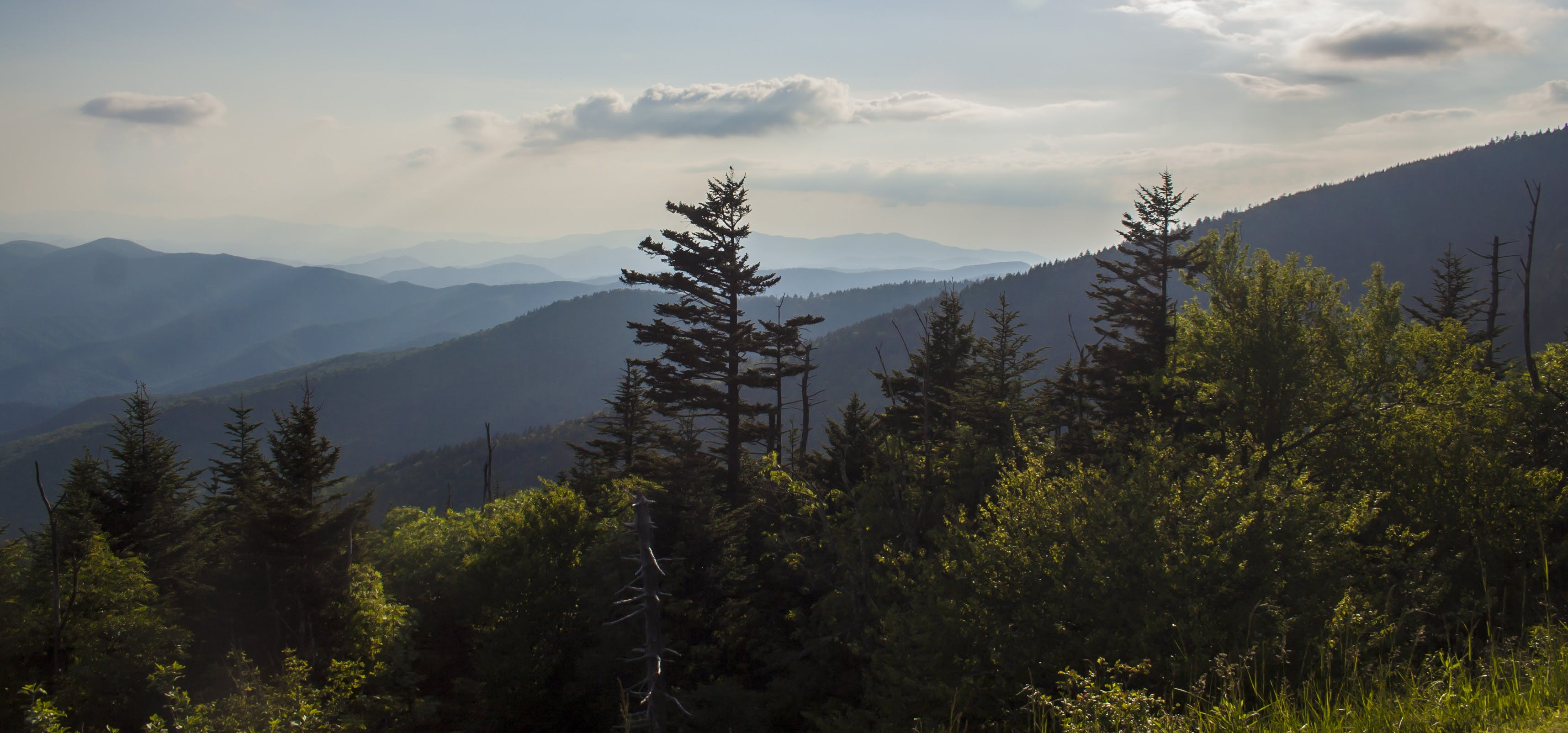 Free stock photo of mountains, nature, smoky mountains
