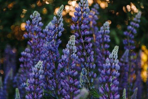 acı baklalar, atmosferik, Bahar çiçekleri, bitki örtüsü içeren Ücretsiz stok fotoğraf