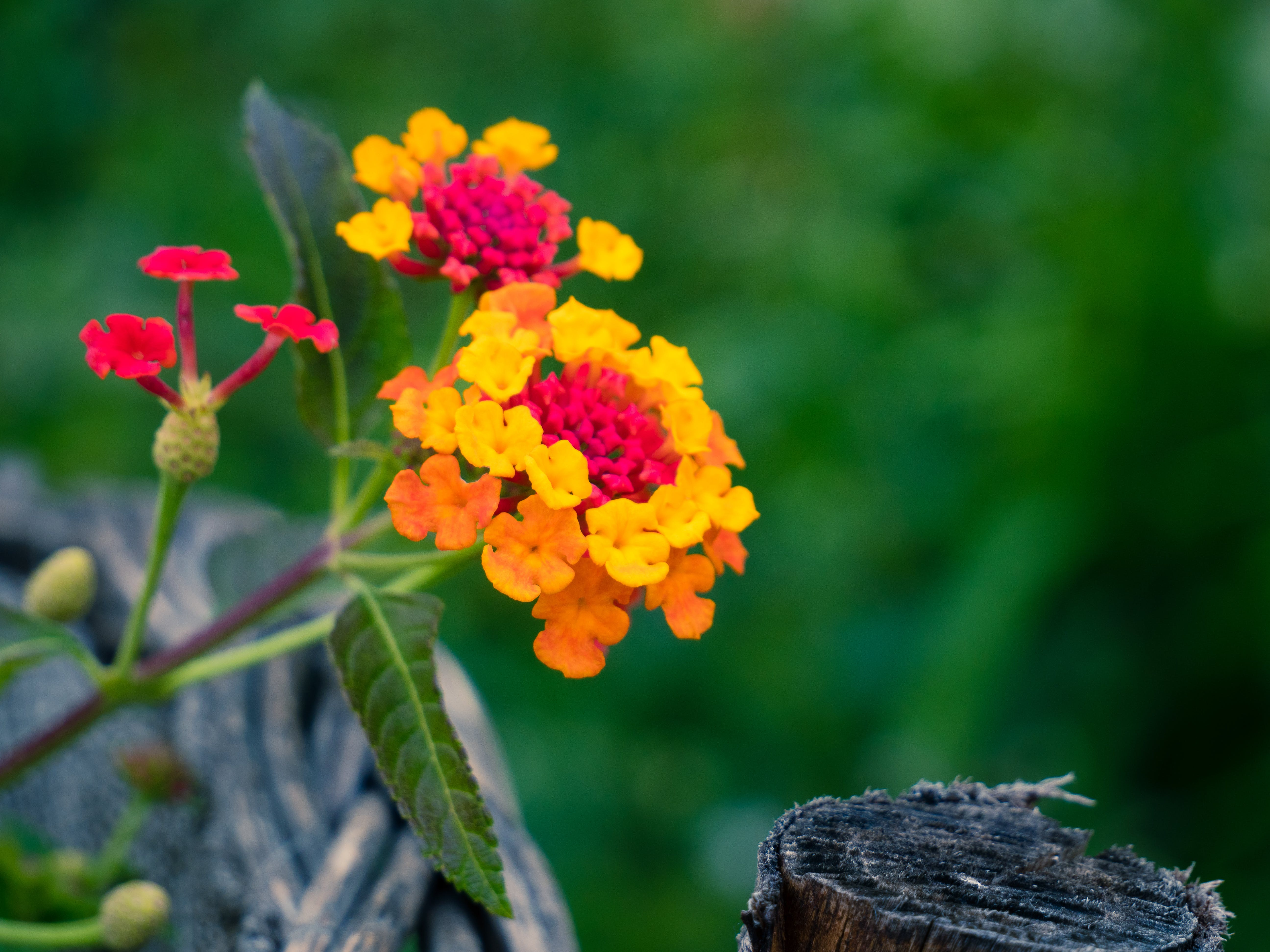Free stock photo of wood, nature, flower, green