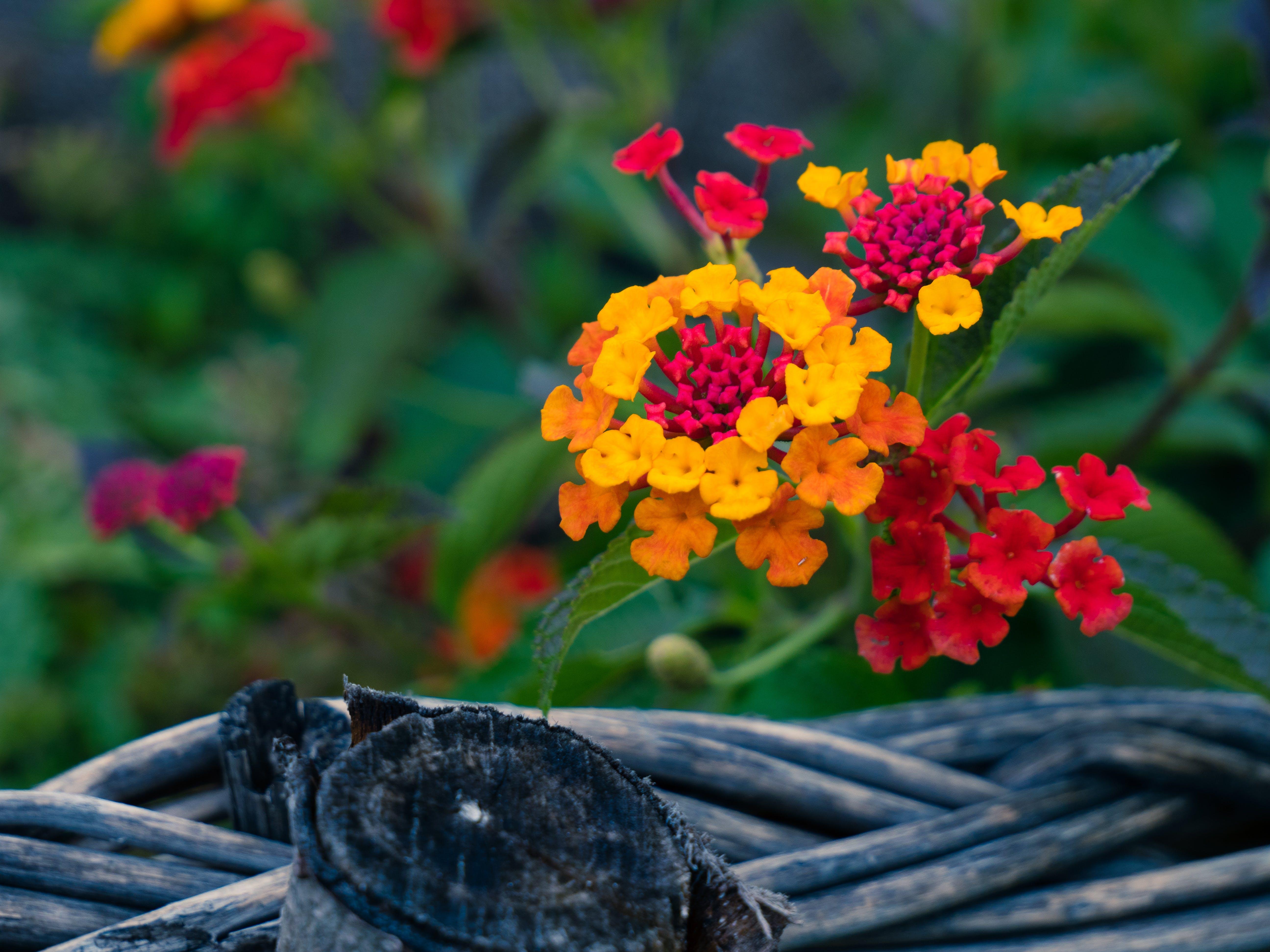 Free stock photo of bloom, deail, flower, macro