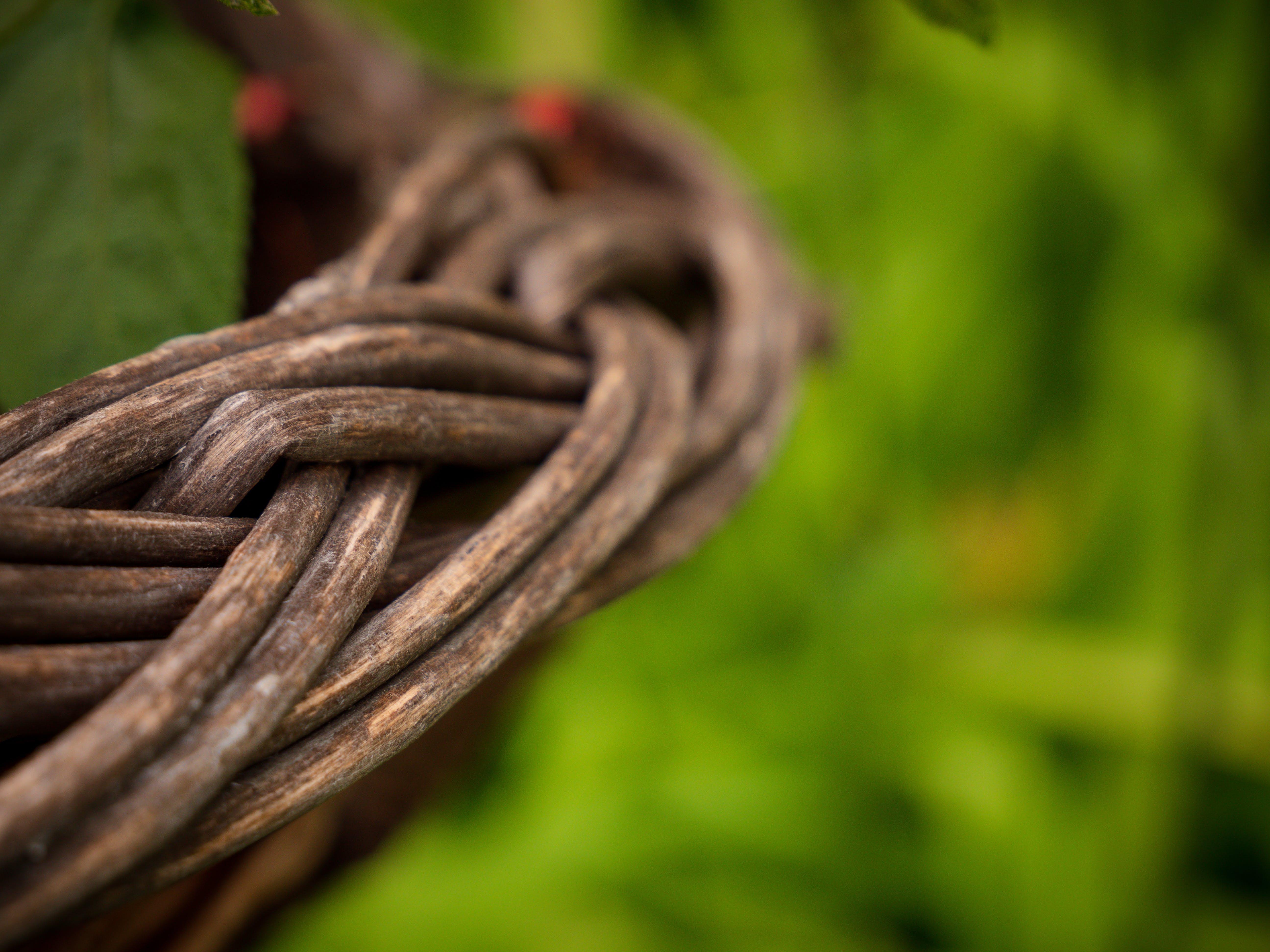 Free stock photo of detail, foliage, green, wallpaper