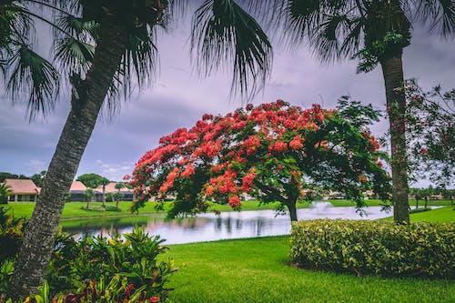 Foto profissional grátis de árvores, atraente, aumento, bonito