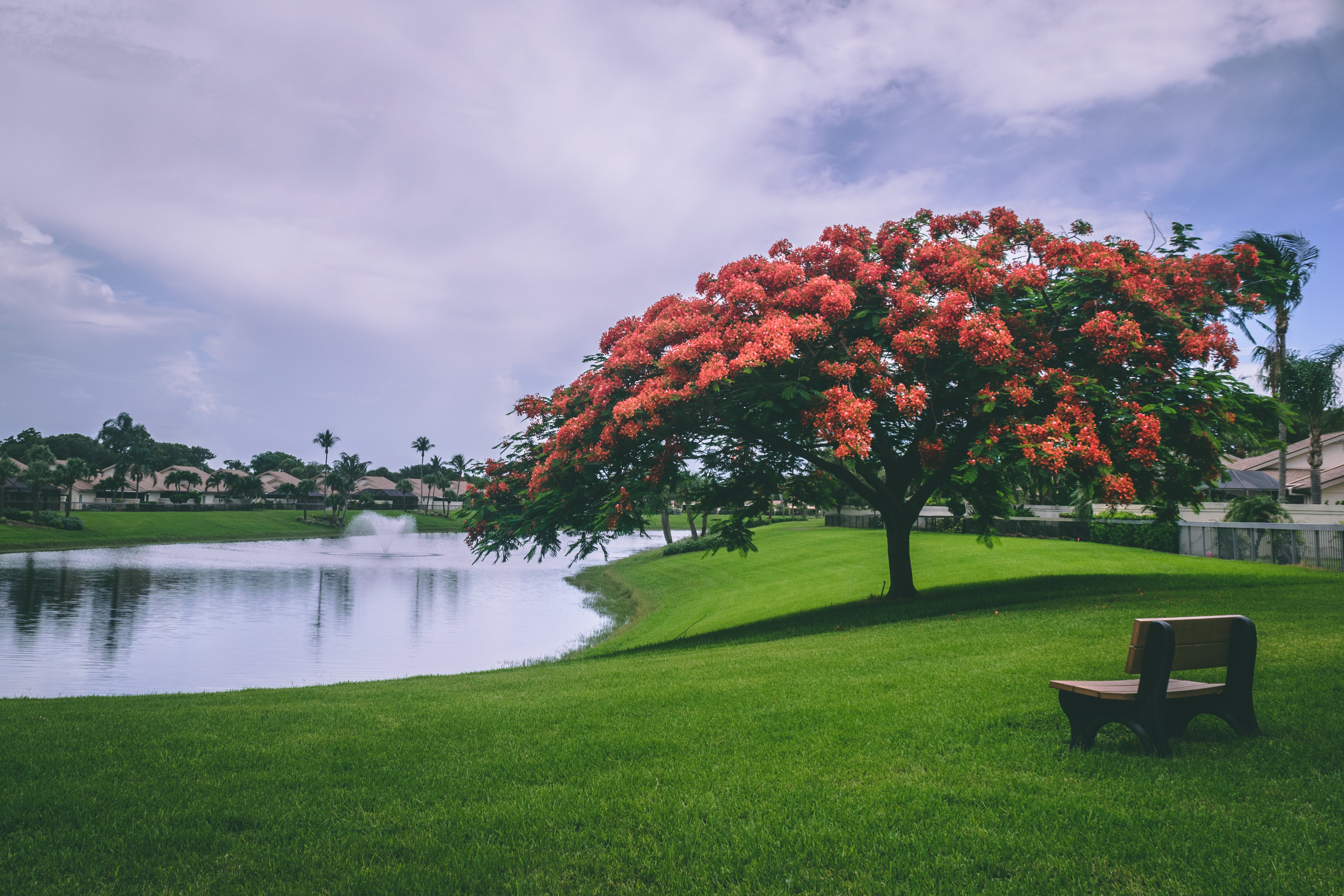 Photo of Red Flowering Trees Beside Body of Water