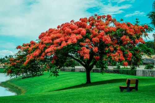 Gratis lagerfoto af bænk, ensom, florida, græs