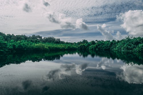 Imagine de stoc gratuită din apă, arbori, calm, corp de apă