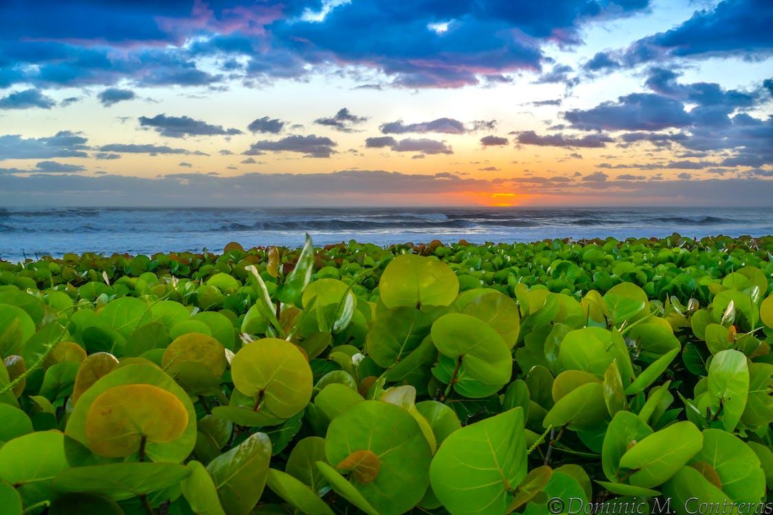 beach, bush, florida