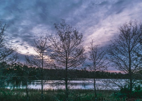Gratis lagerfoto af florida, himmel, solopgang, træ