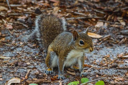 Gratis lagerfoto af dyr, egern, fauna, florida