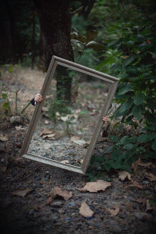 反射, 森林, 樹林, 鏡子 的 免費圖庫相片