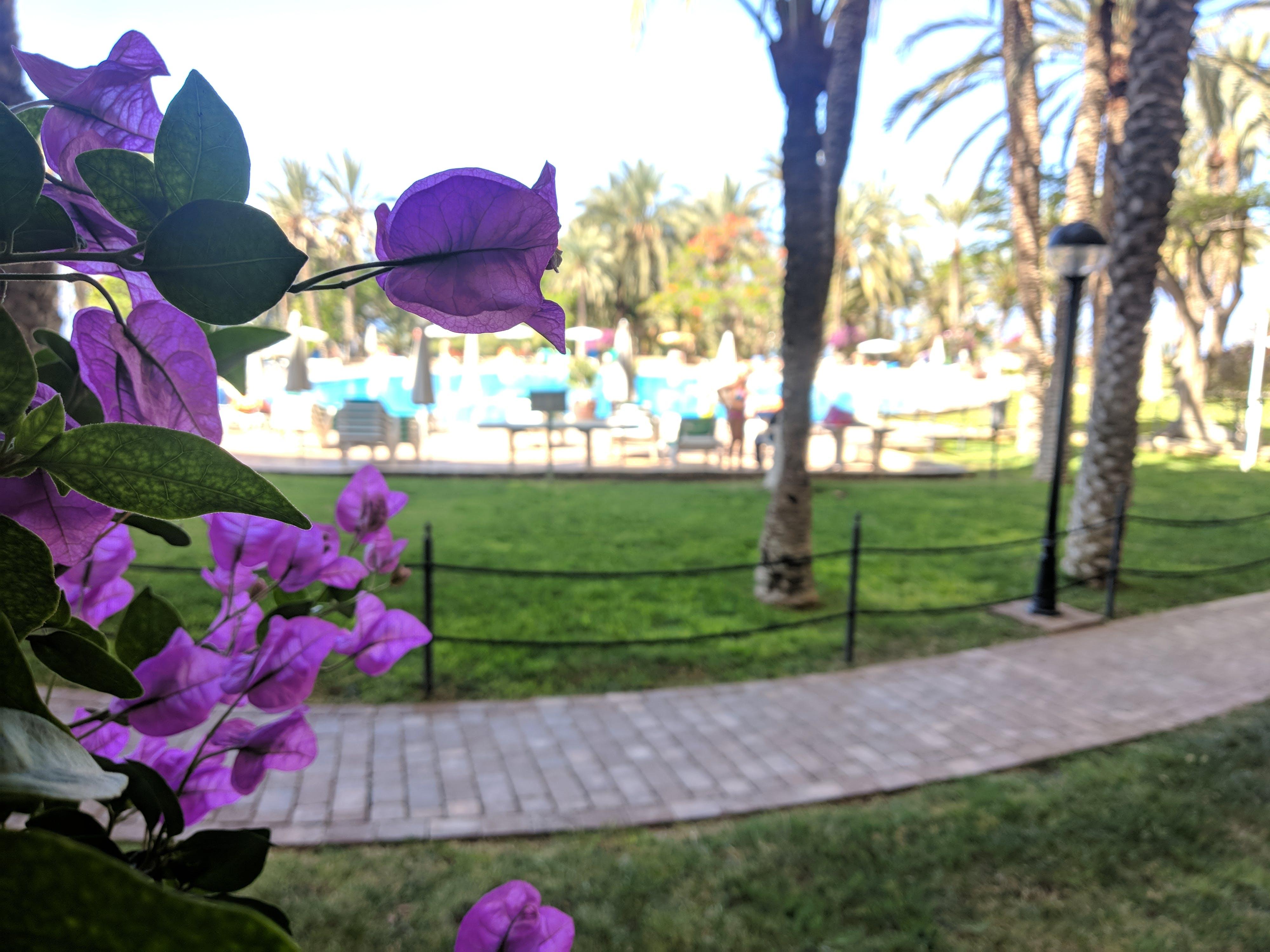 Free stock photo of garden, hotel, sunny, swimming pool