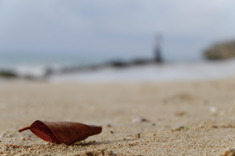 Dry Leaf On Sand