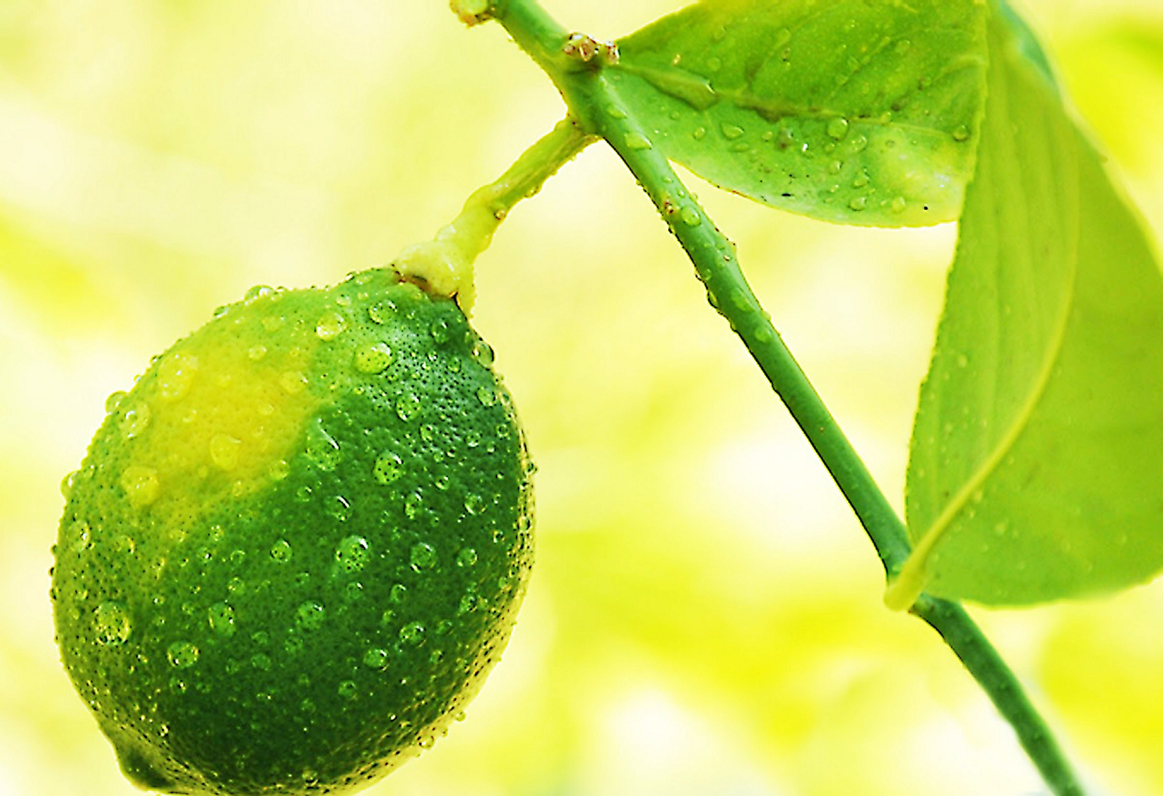 Free stock photo of lime, water drops