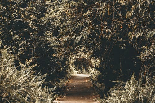 Silhouette Photography of Tree Tunnel