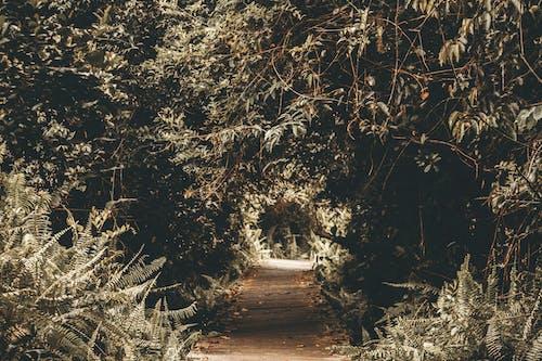 Immagine gratuita di albero, ambiente, arte, direzione