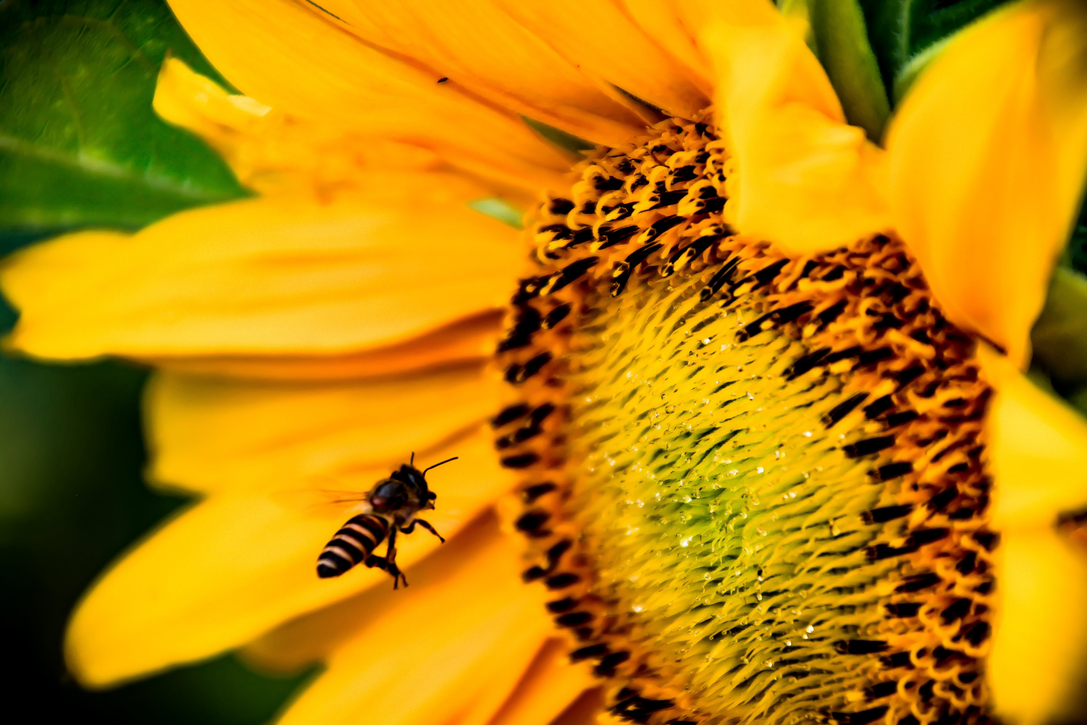 Shallow Focus Photography Of Honey Bee