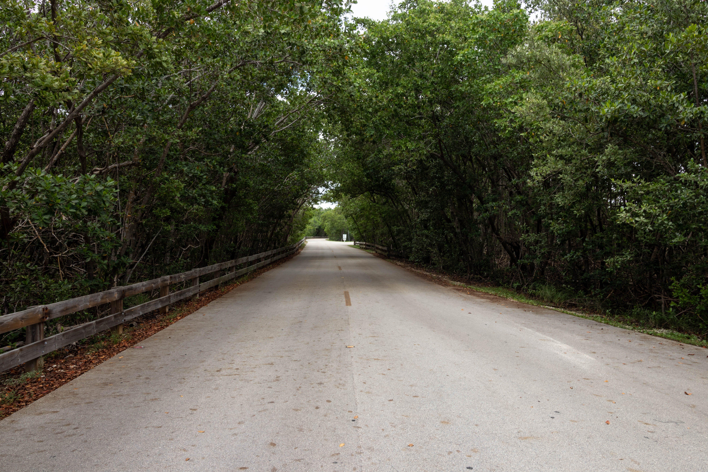 Kostenloses Stock Foto zu bäume, leere straße, miami, park