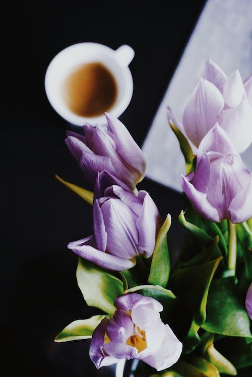 コーヒー, チューリップ, フラワーズ, フローラの無料の写真素材